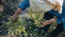 Quarta Settimana della Cucina Italiana nel Mondo - FIOF con A. Gibotta a Washington 2019